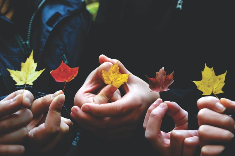 Hands holding leaves